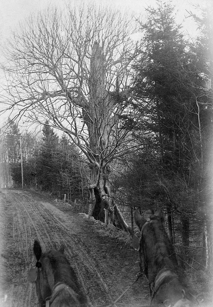 Lind_1900